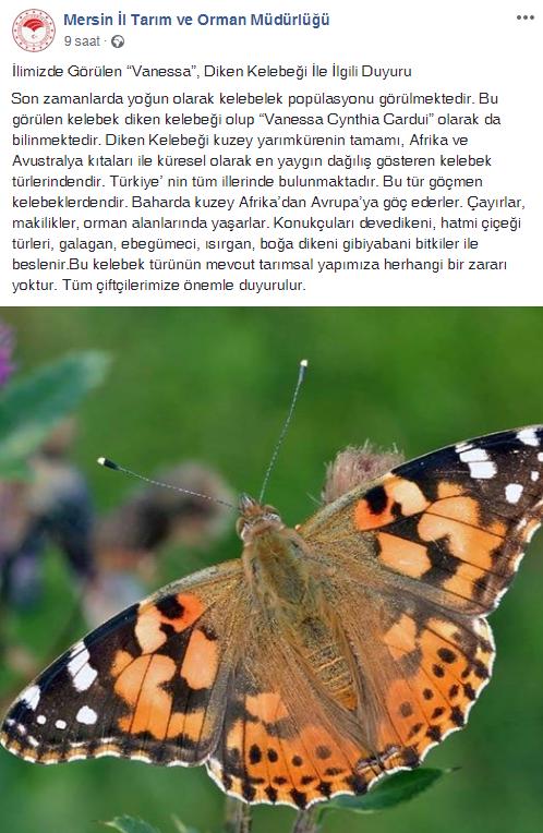Kelebek İstilası
