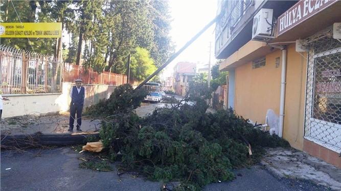 Tarsus'ta fırtına ağaçları devirdi, çatıları uçurdu