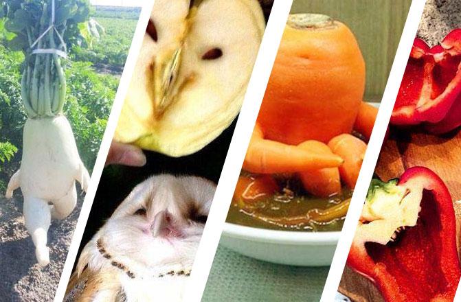 Meyve ve Sebzelerin Diğer Canlılara Mükemmel Benzerlikleri