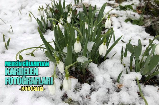 Kardelen Çiçeği Mersin'de Açıyor, Kutlay Özcan'ın Objektifinden