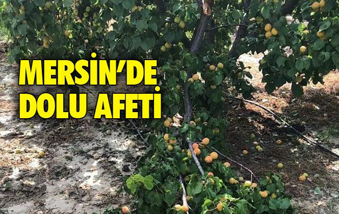 Mersin'de Dolu Afeti Kayısı Bahçelerini Vurdu