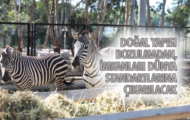 Revizyon Çalışması Başlatılacak Olan Tarsus Hayvan Parkında Hayvan Sayısı da Artırılacak