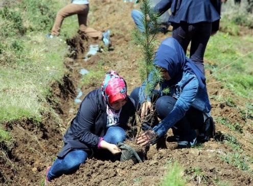 'Bereket Ormanları' Projesi Samsun'da Hayat Buldu