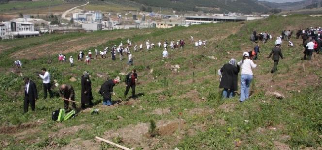 Bursa'da Bereket Ormanları Kuruldu