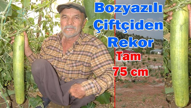 Bozyazılı Çiftçinin Ürettiği Salatalık Tam 75 Cm
