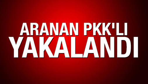 Mersin de Bir PKKlı Yakalandı
