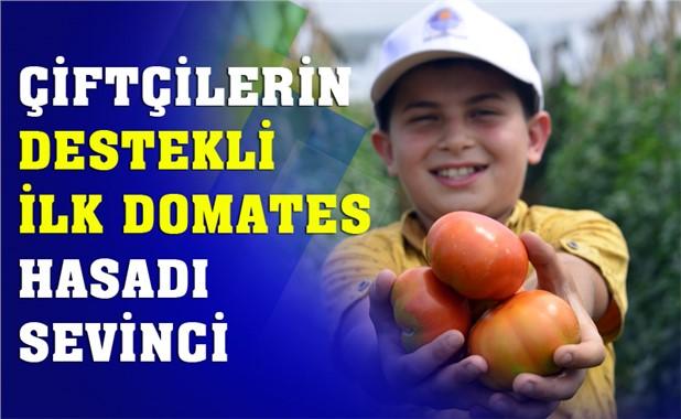Mersin Çamlıyayla'da Çiftçinin Tarımsal Destekli İlk Domates Hasadı Sevinci