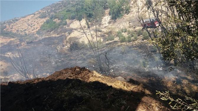 Zeytinlik Alanda Başlayan Yangın, Ormanlık Alana Sıçradı