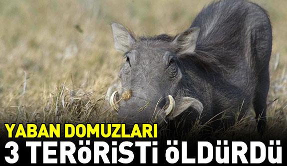 Yaban domuzları 3 terörist öldürdü
