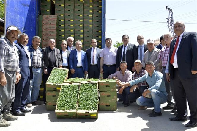 Mersin Büyükşehir'den Üreticiye 260 Bin Domates Fidesi