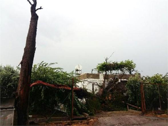 Mersin'de Fırtına Ağaçları Devirdi. Bir Aile Evde Mahsur Kaldı