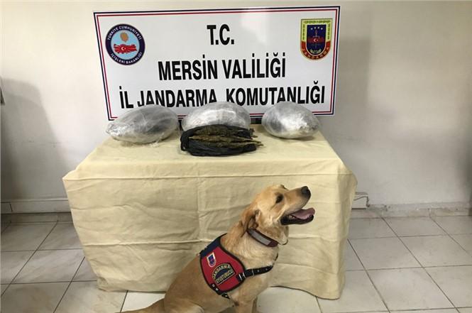 Mersin Jandarma'sından Uyuşturucu Madde Kaçakçılığı Yapanlara Operasyon