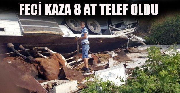 Feci Kazada 2 Kişi Yaralandı, 8 At Telef Oldu