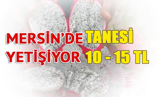 Mersin'de Yetişiyor Tanesi 10 - 15 TL'ye Satılıyor, Ejder Meyvesi (Pitahaya)