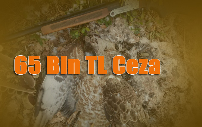 Yırtıcı Kuşları Avlayanlara 65 Bin TL Para Cezası!