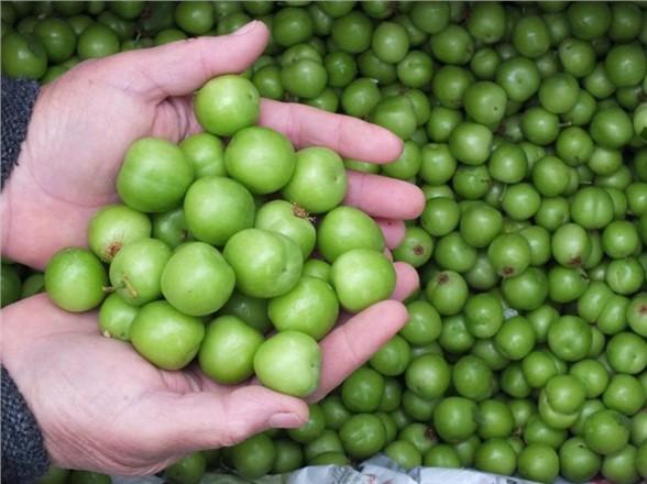 Çukurova Meyve Sektöründe