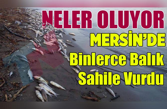 Mersin'de Yüzlerce Balık Sahile Vurdu
