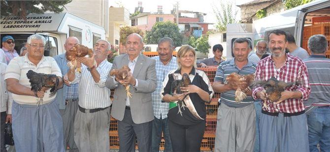 Tarsus Ziraat Odası köylülere bin 350 tavuk dağıttı