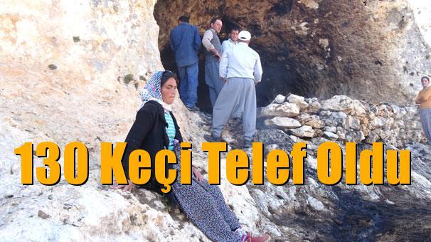 Mersin Gülnar'daki Yangında 130 Keçi Telef Oldu