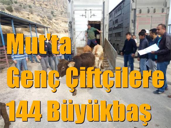 Mersin Mut'ta Genç Çiftçilere 144 Büyükbaş