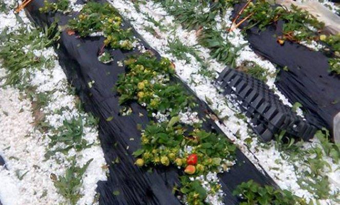 Mersin Silifke'de Dolu Felaketi, Bölgede Etkisini Gösteren Dolu Ciddi Zarar Verdi