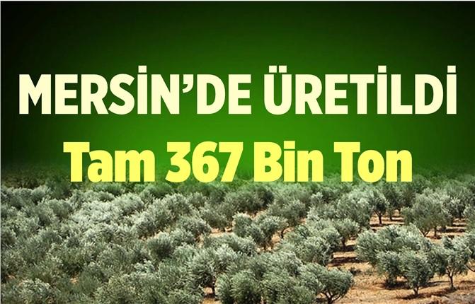 Mersin Mut'taki Zeytin Üretimi Rekoltesiyle Yüzleri Güldürdü