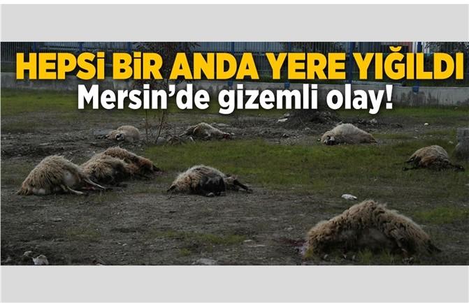 Mersin'de Gizemli Olay