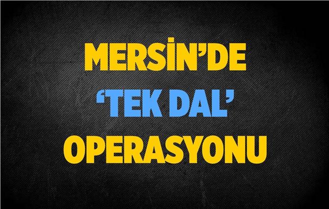 Mersin'de 'Tek Dal' Operasyonu