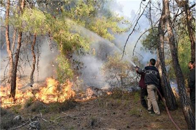 Orman Yangınlarına Karşı Dikkatli Olalım