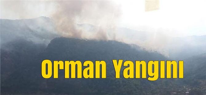 Mersin'de Orman Yangını, Henüz Sebebi Bilinmeyen Yangına Müdahale Edildi