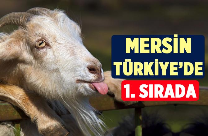 Mersin Türkiye Sıralamasında Birinci Sırada