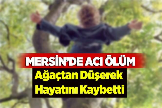 Mersin'de Acı Ölüm! Ağaçtan Düşerek Hayatını Kaybetti