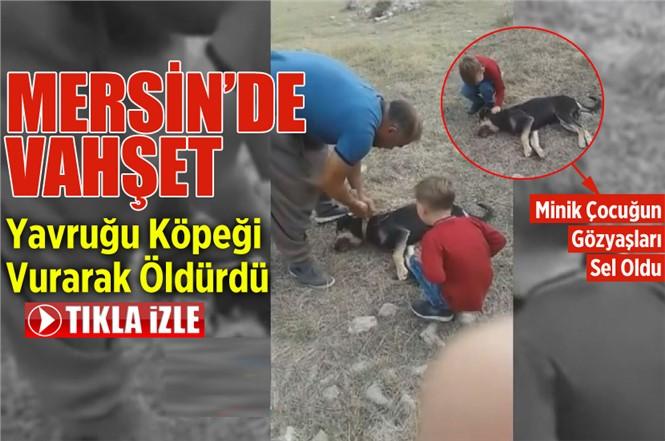 Mersin'de Bir Kişi Komşusunun Yavru Köpeğini Silahla Vurarak Öldürdü