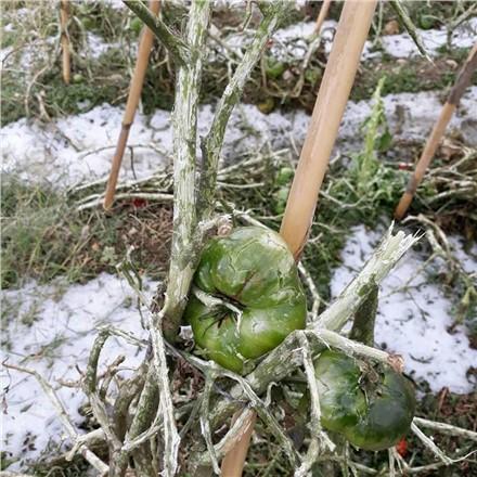 Mersin Dolu Felaketi Yaşadı! Çiftçilerin Zararı Büyük