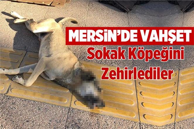 Mersin'de Zehirlenen Köpeğe Gülnar Belediyesi Sahip Çıktı