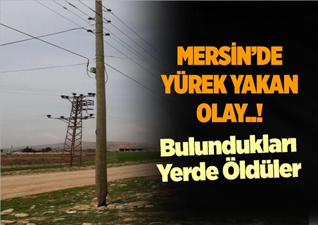 Mersin'de Tarsus'ta Elektrik Akımına Kapılan Koyunlar Telef Oldu
