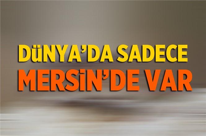 Anadolu Dikenli Faresi Dünyada Sadece Mersin'de Var