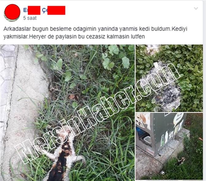 Mersin Yenişehir İlçesi Limonluk Mahallesinde Kedi Katliamı, Yakarak Öldürmüşler