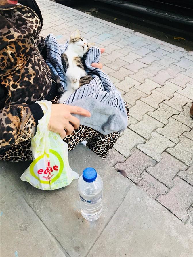Mersin'de Kliniğe Getirilen Hasta Kediye,Veterinerden Tekme