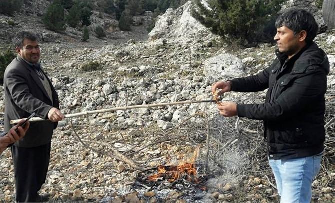 Mersin Silifke Çaltıbozkırlılar 30 Metrelik Ağaçlardan Mantar Topluyor