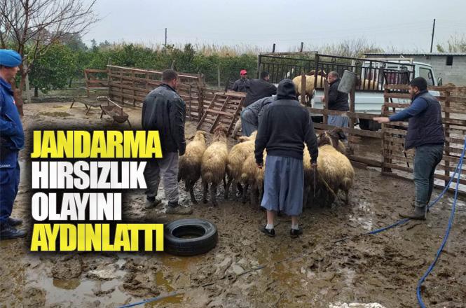 Mersin Tarsus'ta Çalınan Küçükbaş Hayvanlar Jandarmanın Çalışmasıyla Bulundu, 1 Kişi Gözaltına Alındı
