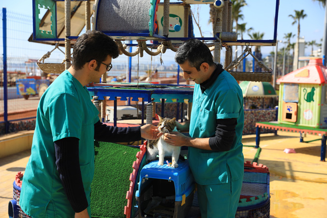 Dünya Kediler Gününde Mersin'de Proje İle Kurulan Miyav Park Muhtarını Seçti