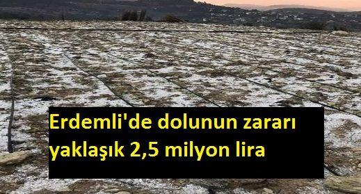 Mersin Erdemli'de Etkili Olan Dolu Yağışı Büyük Zarara Yol Açtı, Erdemli'de Dolunun Zararı 2.5 Milyon Lira