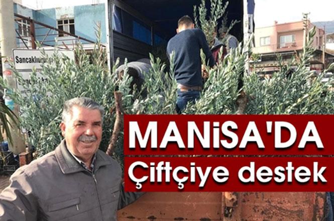 Manisa Şehzadeler Ziraat Odası, Üreticilere 35 Bin Trilye Cinsi Zeytin Fidanı Dağıttı