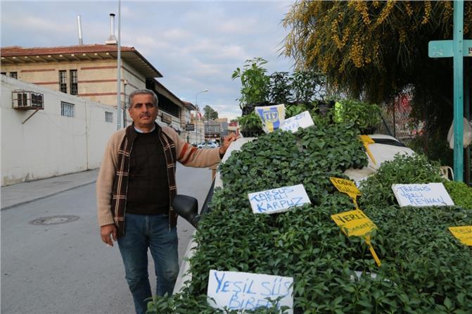 Tarsuslu Halil Yıldırım, Uzun Yıllardır Yetiştirdiği Fideleri Satarak Gelir Sağlıyor
