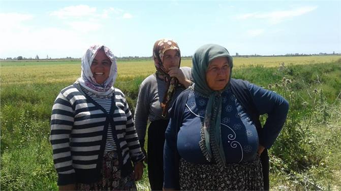 Mersin Tarsus'ta Üç Gündür Kayıp İnekleri Bataklıkta Bulundu