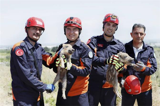 Mersin'de Çukura Düşen Domuz Yavruları İtfaiye Ekipleri Tarafından Kurtarıldı