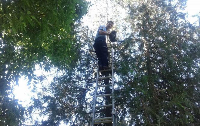 Mersin Tarsus'ta Yaramaz Kedi Ağaçta Mahsur Kaldı