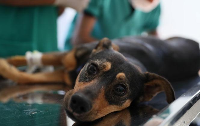 Mersin Büyükşehir Belediyesi, Sahipsiz Hayvanları Koruması Altına Alarak, Yaralarını Sarıyor