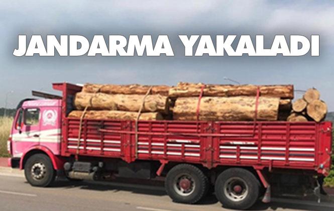 Orman'dan 61 Adet Kaçak Kesim Ağaç Yakalandı